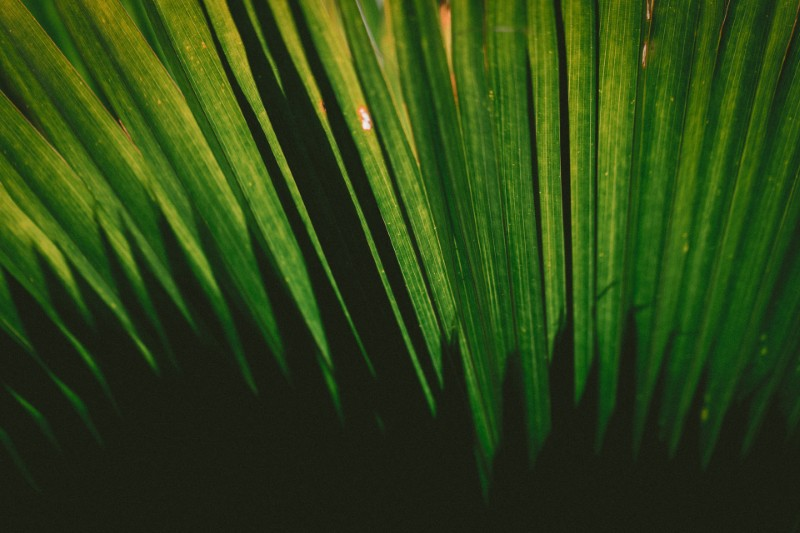 Sukkot: Dwelling In the Shade of Faith