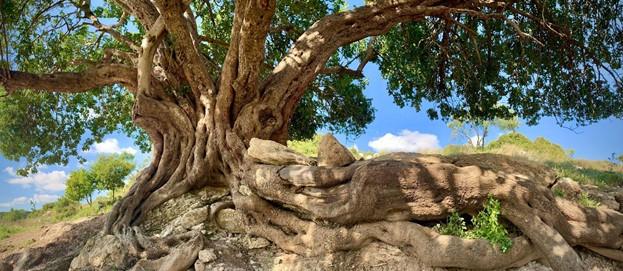 לשבת בשקט לפני עץ ולתקשר איתו איננה כה מקובלת כיום בתרבות שלנו
